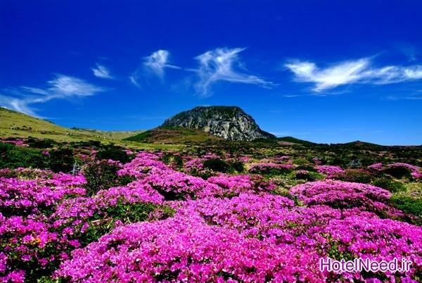 کوه Halla