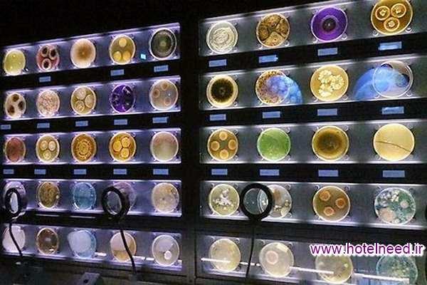 موزه میکروب